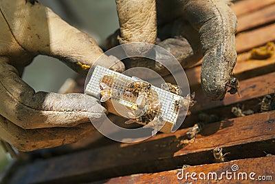 Queen Bee with Attendants