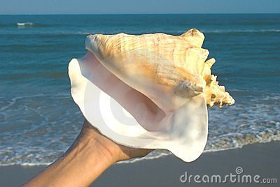 Queen Conch in hand