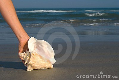 Queen Conch in hand