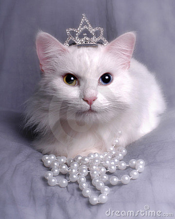 Queen Kitty