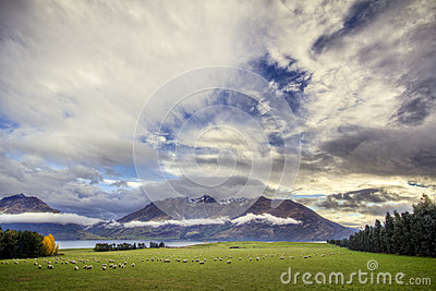 Queenstown Sheep Field Sunset