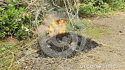 Queimadura do desperdício de jarda, desperdícios ardentes, grama da queimadura vídeos de arquivo