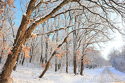 Paceful trees in winter background
