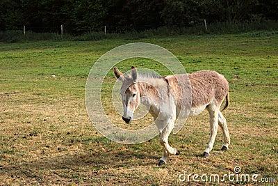 Quiet donkey