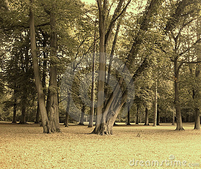 Quiet Forest Royalty Free Stock Photos - Image: 22069048
