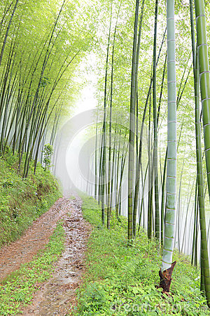 Quiet road in the bamboo forest
