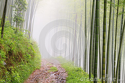 Quiet road road in the bamboo forest