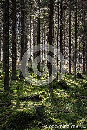 Quiet shady forest