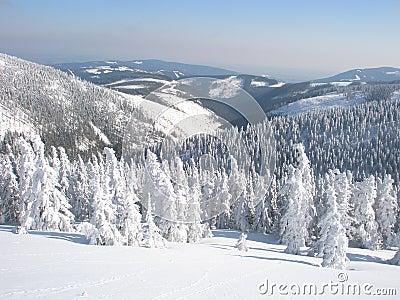 Quiet winter snowy landscape