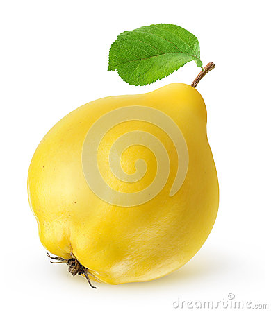 Free Quince Stock Photography - 42504142