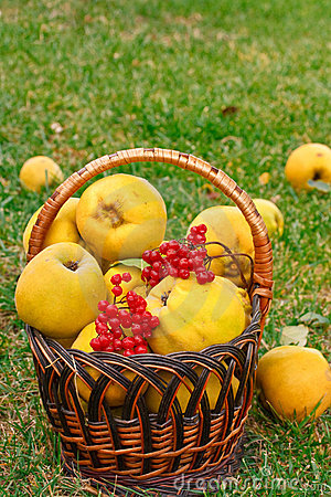 Quince in the basket