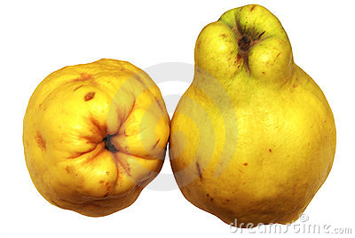 Quince fruit on a white background