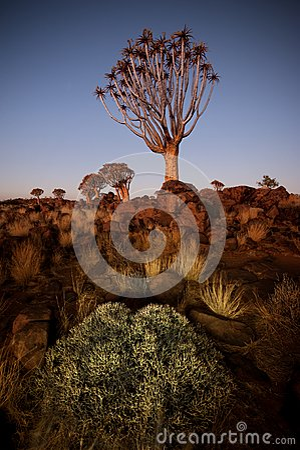 Quiver tree 3