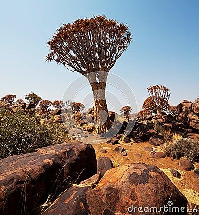Quiwer tree