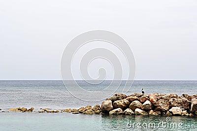 Récif et oiseau rocheux
