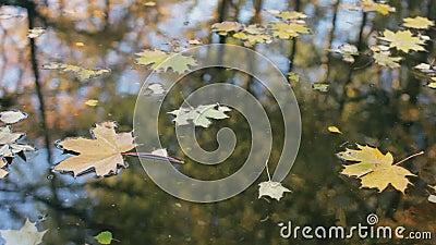 Réflexion des arbres dans l'eau Feuilles jaunes et d'orange sur l'étang clips vidéos