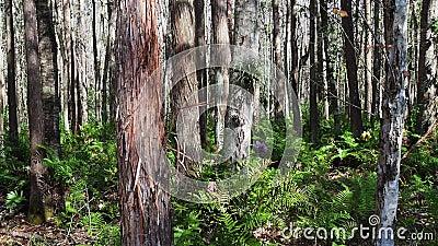 régions boisées centrales de la Floride en automne banque de vidéos