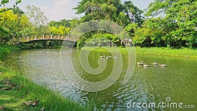 Río en el parque y árboles verdes con los puentes viejos metrajes