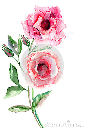 Róża piękni kwiaty