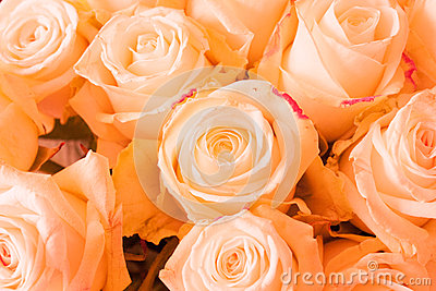 Róże Pomarańczowe