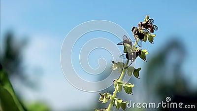 RÓŻNORODNE pszczoły W niebie