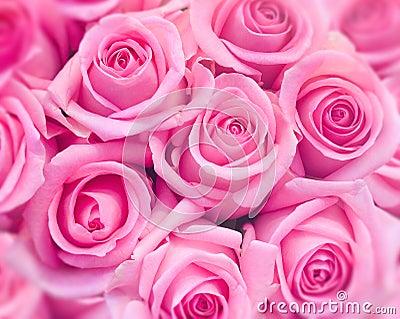Różowe róże