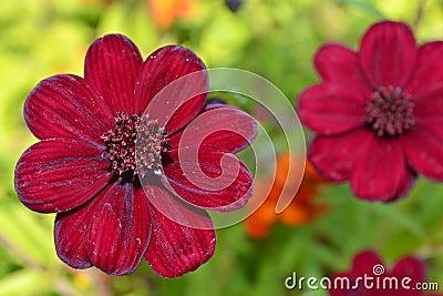 Röd blommaträdgård