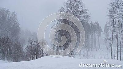 Rússia, em fevereiro de 2019: blizzard e grandes trações Um forte vento agita as árvores na floresta do inverno vídeos de arquivo