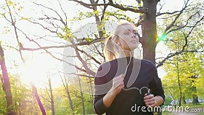 Rütteln im Wald auf dem Hintergrund der untergehenden Sonne stock video
