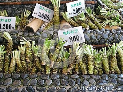 Raíz de Wasabi para la venta