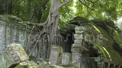 Raízes de árvores e uma seção de parede quebrada no templo de moda, anjo vídeos de arquivo