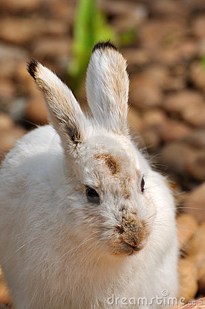 Free Rabbit Stock Images - 18733444