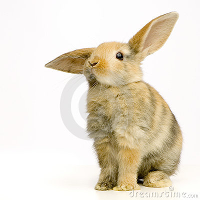 Free Rabbit Royalty Free Stock Image - 2331676