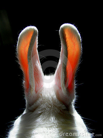 Free Rabbit Royalty Free Stock Photos - 3239328