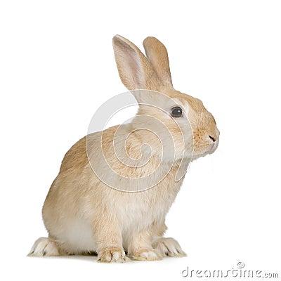 Free Rabbit Royalty Free Stock Image - 4990506