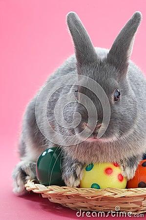 Free Rabbit Royalty Free Stock Photos - 626018