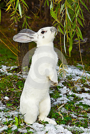 Rabbit in autumn