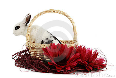 Rabbit in a basket