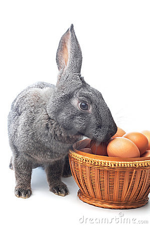 Rabbit and basket with eggs