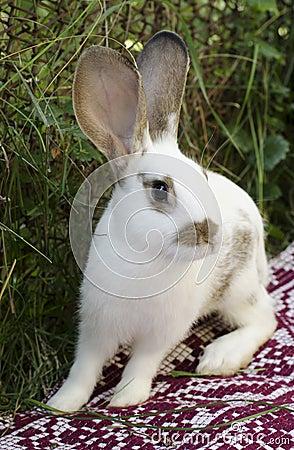 Rabbit on a blanket