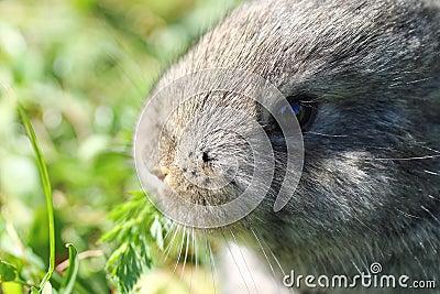Rabbit in blur