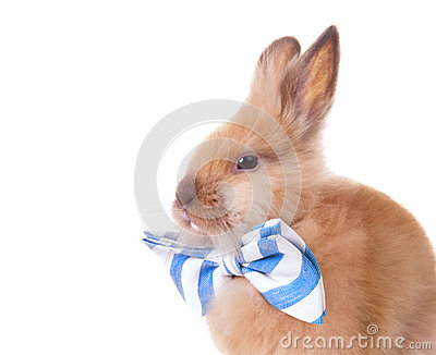 Rabbit with bow tie