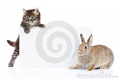 Rabbit And Cat Royalty Free Stock Photography - Image: 11644187