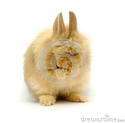 Rabbit cries
