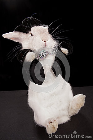 Rabbit dancing