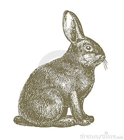 Realistic rabbit illustration - photo#18
