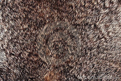 Rabbit fur texture