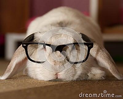 Rabbit In Glasses Stock Photo Image 50866410