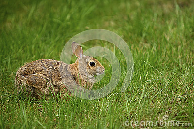 Rabbit in the Grass 1