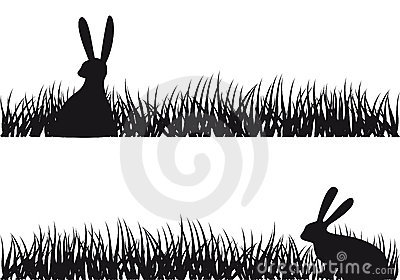 Rabbit in grass,